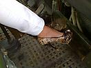 Schuhe im MAN-Truck_1